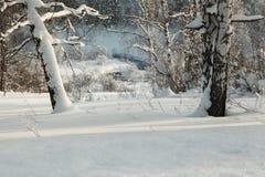 Los troncos nevados de abedules en el invierno se inclinan con el arroyo Fotografía de archivo libre de regalías