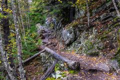 Los troncos y el otoño de árbol caidos colorearon con hojas a lo largo de un trai que caminaba imágenes de archivo libres de regalías
