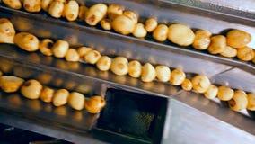 Los tubérculos de la patata están consiguiendo clasificados automáticamente almacen de video