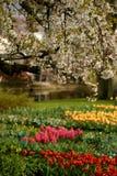 Los tulipanes Imagenes de archivo