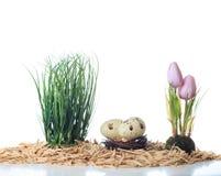 Los tulipanes del arreglo de Pascua eggs la hierba de la jerarquía en el fondo blanco fotos de archivo libres de regalías