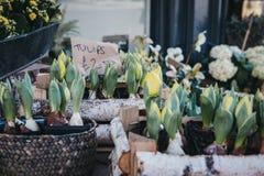 Los tulipanes en conserva en venta en un mercado callejero atascan Imagenes de archivo