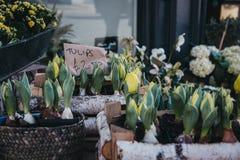 Los tulipanes en conserva en venta en un mercado callejero atascan Imagen de archivo libre de regalías
