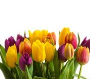 Los tulipanes en un fondo de madera, primavera florecen Imagenes de archivo