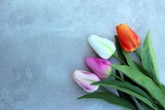 Los tulipanes encendido tuercen el fondo del concerte con el espacio de la copia para el mensaje Fondo del día del ` s de la madr Imagenes de archivo