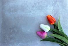 Los tulipanes encendido tuercen el fondo del concerte con el espacio de la copia para el mensaje Fondo del día del ` s de la madr Fotos de archivo