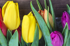 Los tulipanes frescos se cierran para arriba Foto de archivo libre de regalías