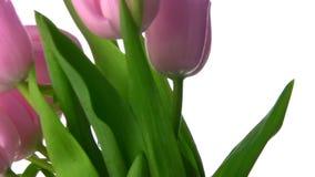 Los tulipanes giran almacen de video