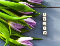 Los tulipanes púrpuras florecen madera brillante de la primavera de la inscripción de madres del día de la naturaleza del ramo ve imagen de archivo libre de regalías