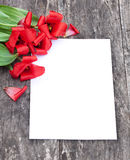 Los tulipanes rojos descolorados en el roble broncean la tabla con la hoja blanca del pape Imagenes de archivo