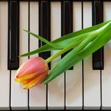 Música y flores imagen de archivo libre de regalías