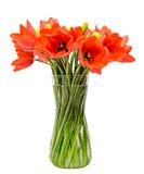 Los tulipanes rojos florecen, arreglo floral (ramo), en un florero transparente, el fondo blanco Foto de archivo libre de regalías