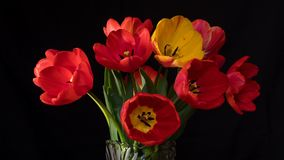 Los tulipanes rojos y amarillos se cierran para arriba en superficie negra
