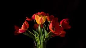 Los tulipanes rojos y amarillos se cierran para arriba en superficie negra cantidad de time lapse video de 4k UltraHD almacen de video