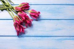 Los tulipanes rosados brillantes hermosos en azul pintaron el fondo de madera fotografía de archivo libre de regalías