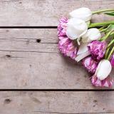 Los tulipanes violetas y blancos brillantes florecen en backgrou de madera envejecido Fotografía de archivo