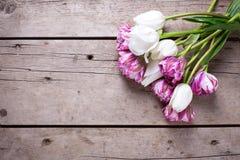Los tulipanes violetas y blancos brillantes florecen en backgrou de madera envejecido Imagen de archivo libre de regalías