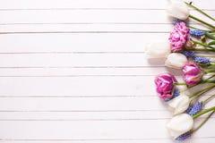 Los tulipanes violetas y blancos brillantes florecen en el backgrou de madera blanco Foto de archivo