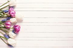Los tulipanes violetas y blancos brillantes florecen en fondo de madera Fotografía de archivo libre de regalías