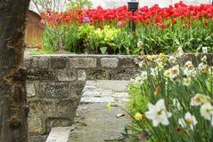 Los tulipanes y los narcissuses rojos florecen en el parque en una escalera de piedra Foto de archivo