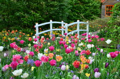 Los tulipanes y un puente en Keukenhof cultivan un huerto, Países Bajos Foto de archivo