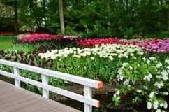 Los tulipanes y un puente en Keukenhof cultivan un huerto, Países Bajos Imagen de archivo libre de regalías