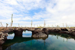 Los Tuneles, Galapagos islands Stock Photography