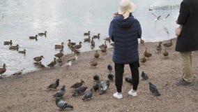 Los turistas alimentan patos en la orilla del río almacen de metraje de vídeo