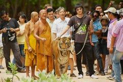 Los turistas caminan con el tigre manejado por Abbot Phra Acharn Phoosit Khantidharo en Tiger Temple Kanchanaburi, Tailandia Foto de archivo