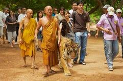 Los turistas caminan con el tigre manejado por Abbot Phra Acharn Phoosit Khantidharo en Tiger Temple Kanchanaburi, Tailandia Fotos de archivo libres de regalías