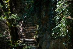 Los turistas caminan a través del bosque a lo largo de la trayectoria imágenes de archivo libres de regalías