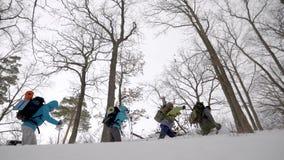Los turistas cansados se están escabulliendo sobre nieve en arbolado en el día de invierno, inclinación encima de la visión desde almacen de video
