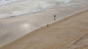Los turistas dan un paseo a lo largo de la playa con un perro, visión desde el cielo almacen de video