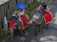 Los turistas disfrutan de paseo del elefante alrededor del parque Fotos de archivo libres de regalías