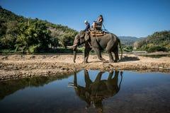 Los turistas en el senderismo del elefante en un elefante acampan Imágenes de archivo libres de regalías