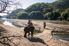 Los turistas en el senderismo del elefante en un elefante acampan Imagen de archivo