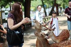 Los turistas gozan de las galletas con los ciervos en sideway Imagen de archivo libre de regalías
