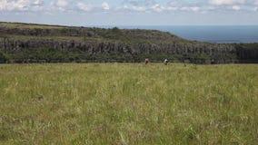 Los turistas jovenes de los adolescentes cruzan un campo cubierto por la hierba en el fondo hermoso del paisaje de la montaña metrajes