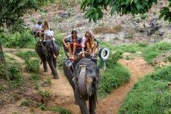 Los turistas jovenes están montando en elefantes a través de la selva Foto de archivo libre de regalías