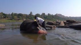 Los turistas miran el ba?o del elefante santo almacen de metraje de vídeo