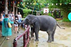 Los turistas miran el elefante mostrar en las bromas de Phang Nga en Tailandia Una mujer está alimentando un elefante de su palma Foto de archivo libre de regalías