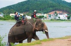 Los turistas montan un elefante en un lago Fotografía de archivo libre de regalías