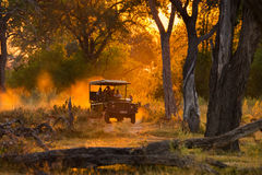 Los turistas que miran la manada del impala en juego de la tarde conducen Foto de archivo