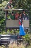 Los turistas que se sientan en un coche especial para un safari y miran la migración de ñus Foto de archivo libre de regalías