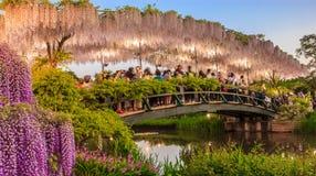 Los turistas toman imágenes en el puente blanco del enrejado de la glicinia en la oscuridad en el parque de la flor de Ashikaga foto de archivo libre de regalías