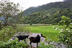 Los vagos sean lago, provincia de Bac Kan, Vietnam - el AMI 06, 2019: La cabra en los vagos sea lago Aturdiendo el paisaje de vag fotografía de archivo