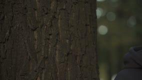 Los varones dan el tacto del tronco de árbol, de la naturaleza de amor, de la protección del medio ambiente y del cuidado almacen de metraje de vídeo