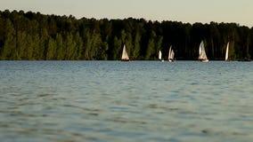 Los veleros navegan en el agua almacen de video
