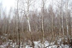 Los verdes debajo de la nieve 20 Imagen de archivo