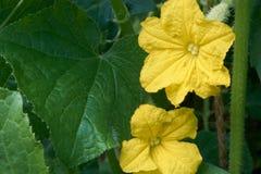 Los verdes y la flor foto de archivo
